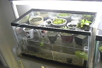 AquaTerrarium1 SMALL