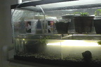 AquaTerrarium SMALL