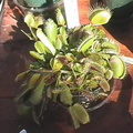 50 year old vft today