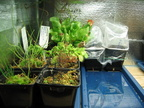 Wezx's terrarium and equipment
