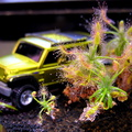 Green Jeep takes rugged and dangerous trek through sticky carnivorous jungle...narrowly escaping becoming dinner for the death-t